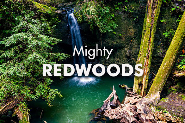Mighty-Redwoods_739x420px