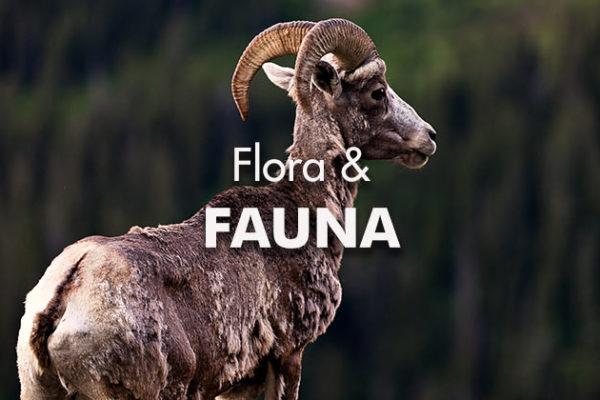 Flora-Fauna_739x420px
