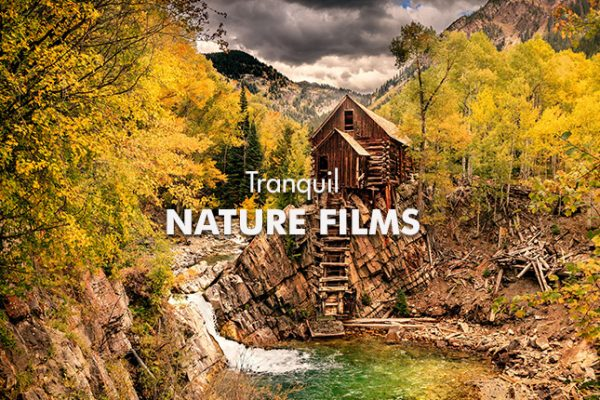 tranquil-nature-films-645x460