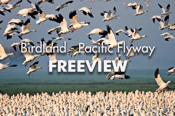 Birdland-Pacific-Flyway-Freeview_739x420px