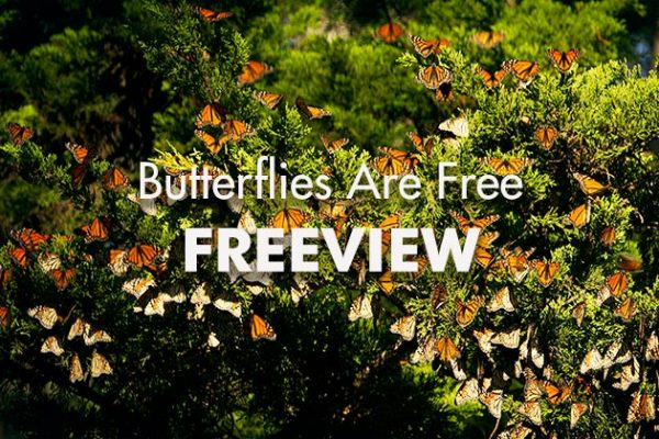 Butterflies-Are-Free-Freeview_739x420px