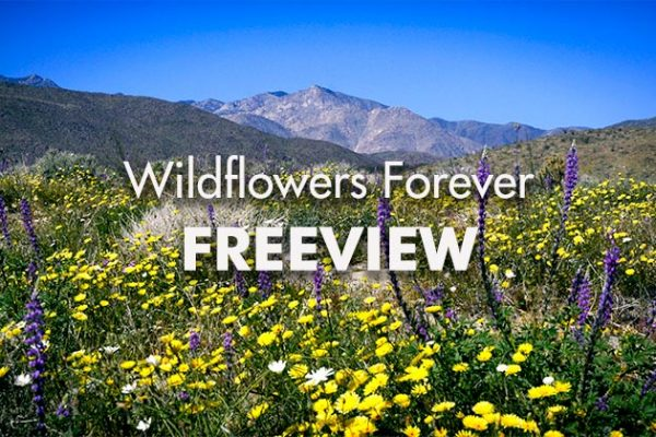 Wildflowers-Forever-Freeview_739x420px